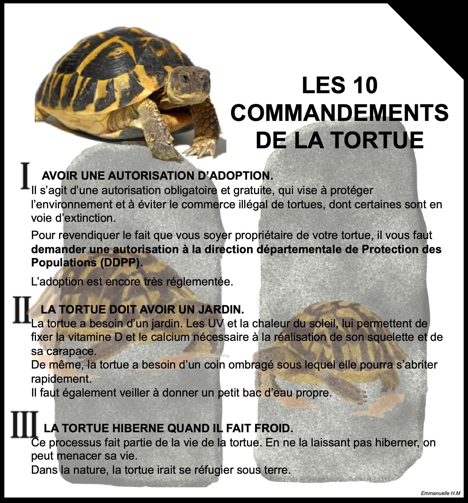 Ce Qu Il Faut Savoir Sur Les Tortues Adopter Une Tortue Les 10 Commandements De La Tortue